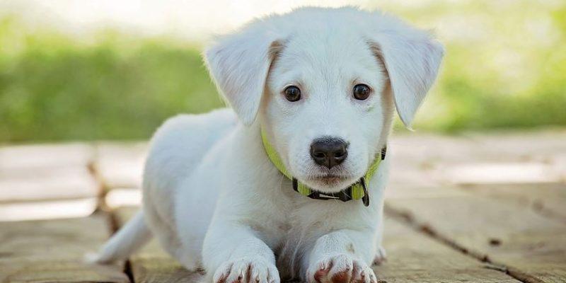 Alojamientos amigables para mascotas
